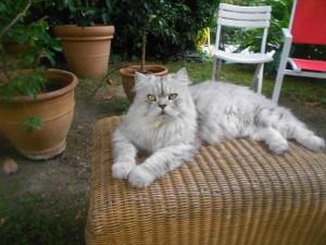 Boris roi des chats du quartier Wilson