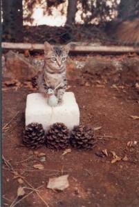 Floc chat sportif pose sur le podium avec la souris de bronze pendue autour du cou