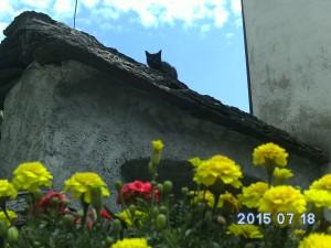 le chat noir perché sur le toit d'ardoise d'un petit village près du Lac Majeur